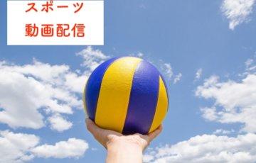 スポーツ動画の無料ライブ配信に関する参考画像